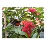 postal butterfly1