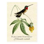 Postal capsulada llano del arte del colibrí de Sta