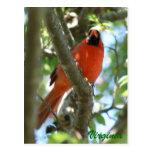 Postal cardinal                           …