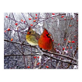 Postal cardinal del navidad