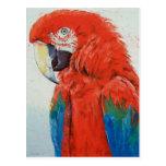 Postal carmesí del Macaw