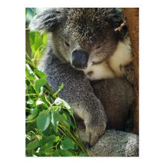 Postal casual de la koala