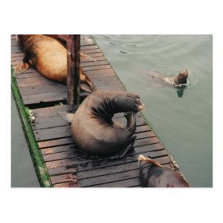 Postal chistosa de pensamiento del león marino
