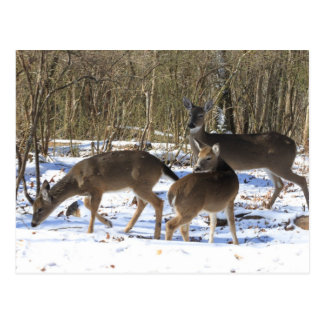 Postal - ciervo en nieve