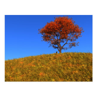 Postal clara del día del otoño