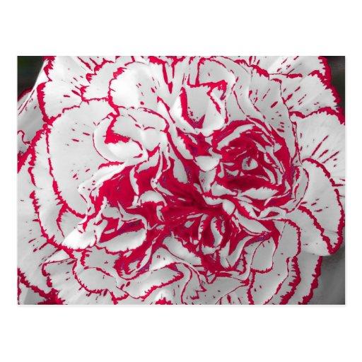 Postal - clavel en rojo y blanco