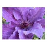 Postal - Clematis púrpura