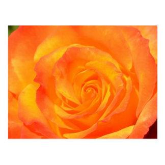Postal color de rosa anaranjada