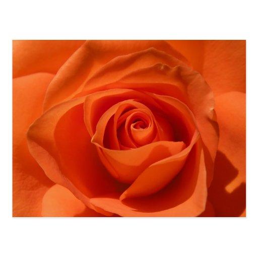 Postal color de rosa anaranjada de la foto
