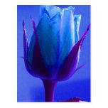 Postal color de rosa azul del placer - personaliza