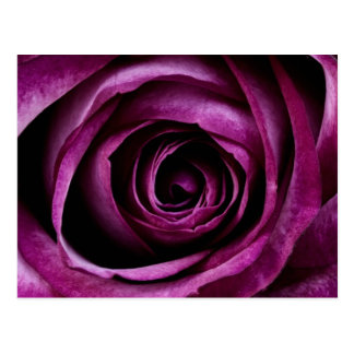 Postal color de rosa de color morado oscuro