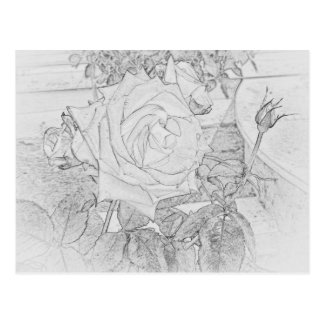 Postal color de rosa de la hoja del colorante