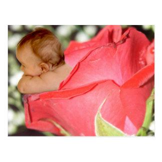 Postal color de rosa del bebé de la flor