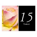 Postal color de rosa en colores pastel del número