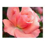 Postal color de rosa rosada