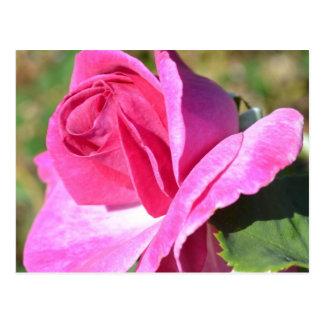 Postal color de rosa rosada de octubre