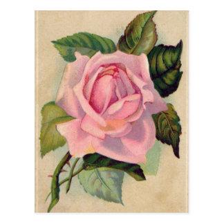Postal color de rosa rosada del vintage