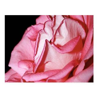 Postal color de rosa rosada enorme