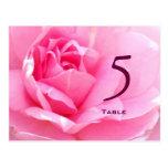 Postal color de rosa rosada preciosa del número de