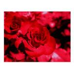 Postal coloreada rosa de los vidrios