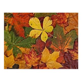 Postal colorida de las hojas de otoño