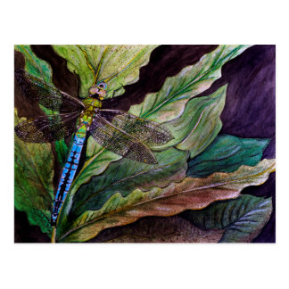 Postal común de la libélula de Darner