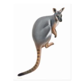 Postal con base amarilla del Wallaby de roca