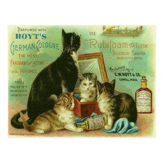 Postal con el ejemplo del vintage de gatitos
