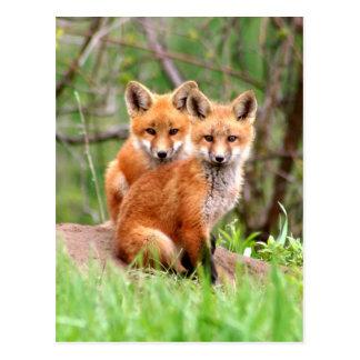 Postal con la foto de los equipos del zorro rojo