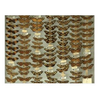 Postal con las mariposas