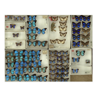Postal con las mariposas del Lycaenidae
