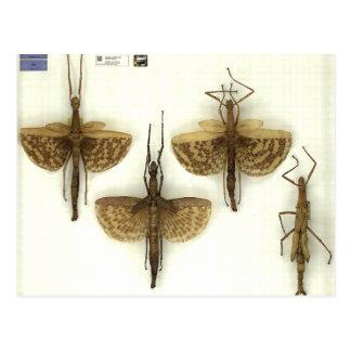 Postal con los insectos de palillo