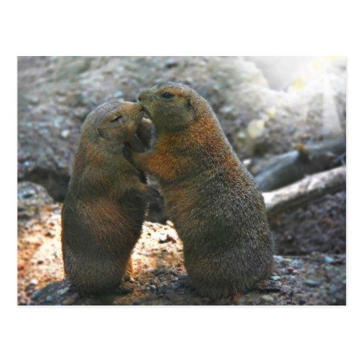 Postal con los pares lindos de la marmota