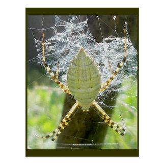 Postal congregada de la opinión dorsal de la araña