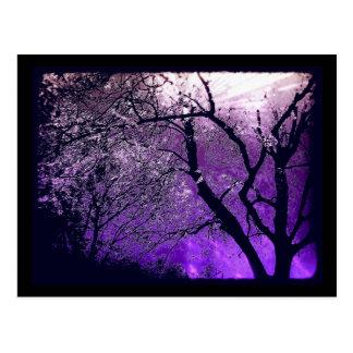 Postal crepuscular de la neblina
