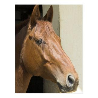 Postal cuarta americana del caballo