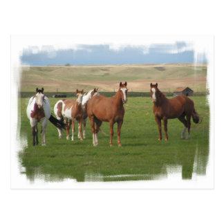 Postal cuarta de la manada del caballo