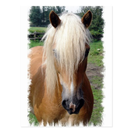 Postal cuarta del caballo del Palomino