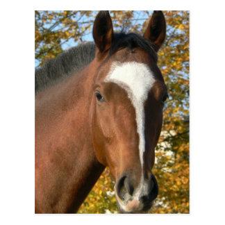 Postal cuarta del caballo