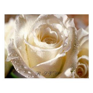Postal cubierta de rocio del rosa blanco R.S.V.P.