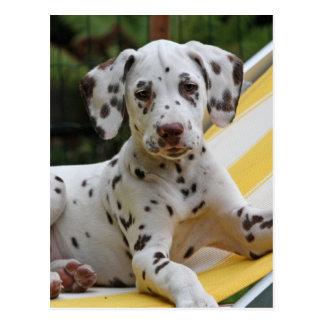 Postal dálmata del perro de perrito