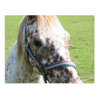 Postal Dappled del caballo del Appaloosa