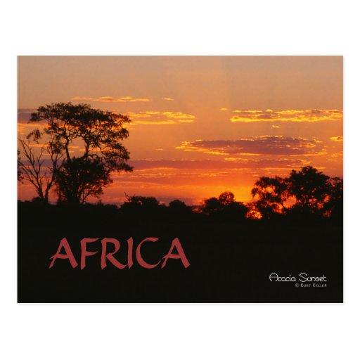 Postal de África de la puesta del sol del acacia