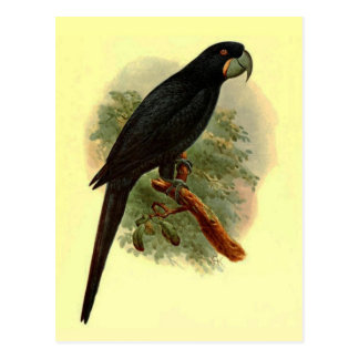 Postal de Anadorhynchus Purpurascens