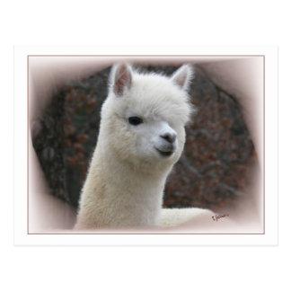 Postal de Analise de la alpaca