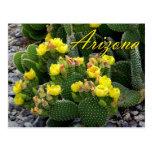 Postal de Arizona, cactus del higo chumbo