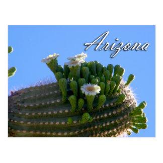 Postal de Arizona, cactus del Saguaro