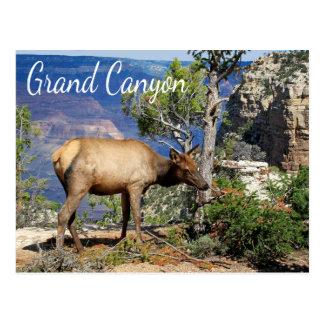 Postal de Arizona del parque nacional del Gran Cañ
