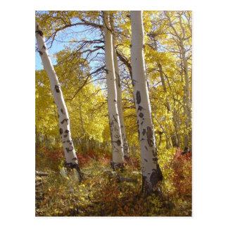 Postal de Aspen del otoño
