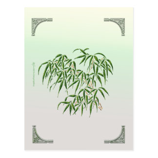 Postal de bambú